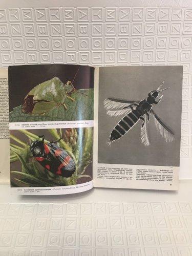 Иллюстрированная энциклопедия насекомых 1977