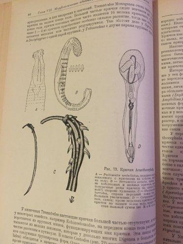 Курс общей паразитологии
