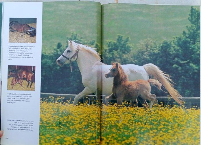 Лошади Мир Животных