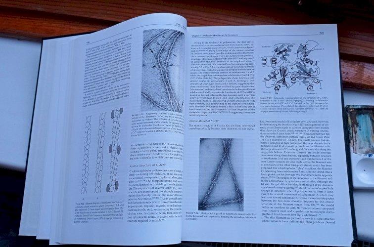 Myology. Engel Andrew G. McGraw-Hill Higher Education. 1-volume